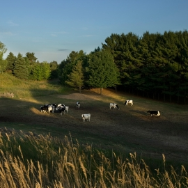 Moomers by Traverse City Photographer Thomas Kachadurian