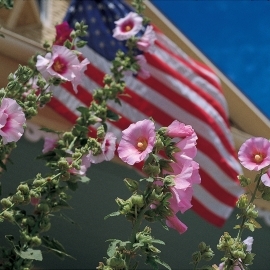 Hollyhocks and flag by Traverse City Photographer Thomas Kachadurian