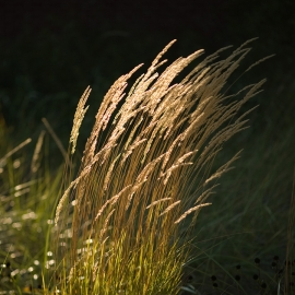 Beach Grass by Traverse City Photographer Thomas Kachadurian