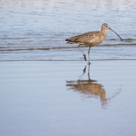 Shorebird by Traverse City Photographer Thomas Kachadurian