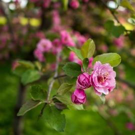 Blossoms by Traverse City Photographer Thomas Kachadurian