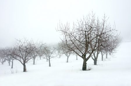 A Foggy Orchard on Old Mission by Thomas Kachadurian